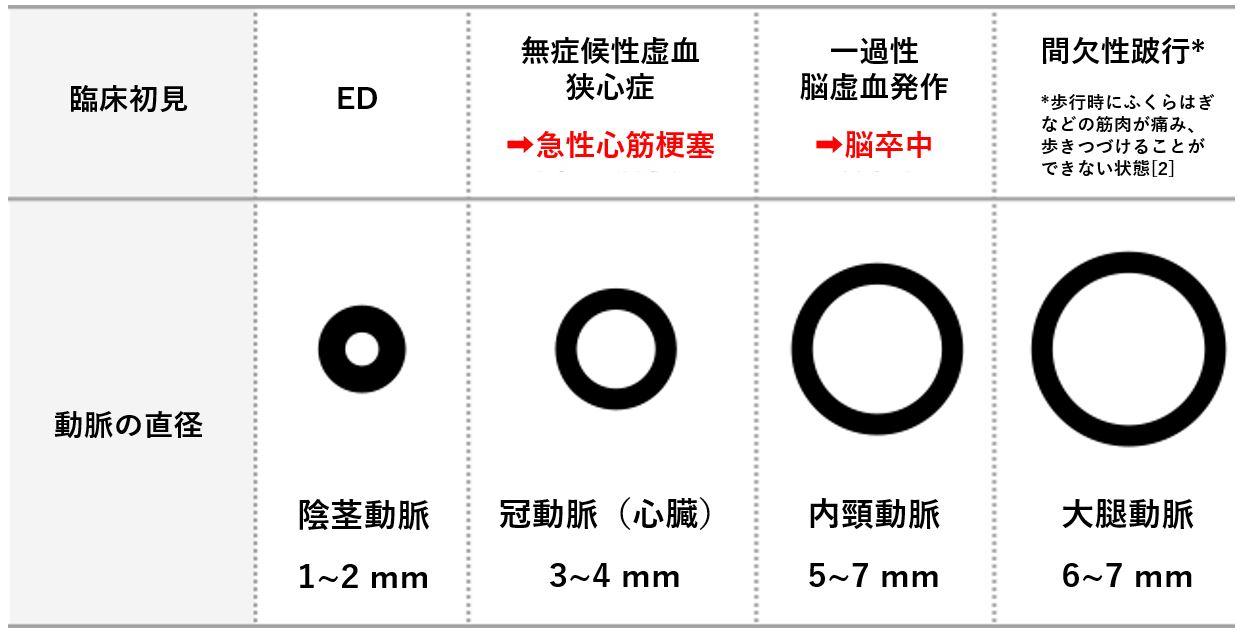 陰茎動脈の直径 ED