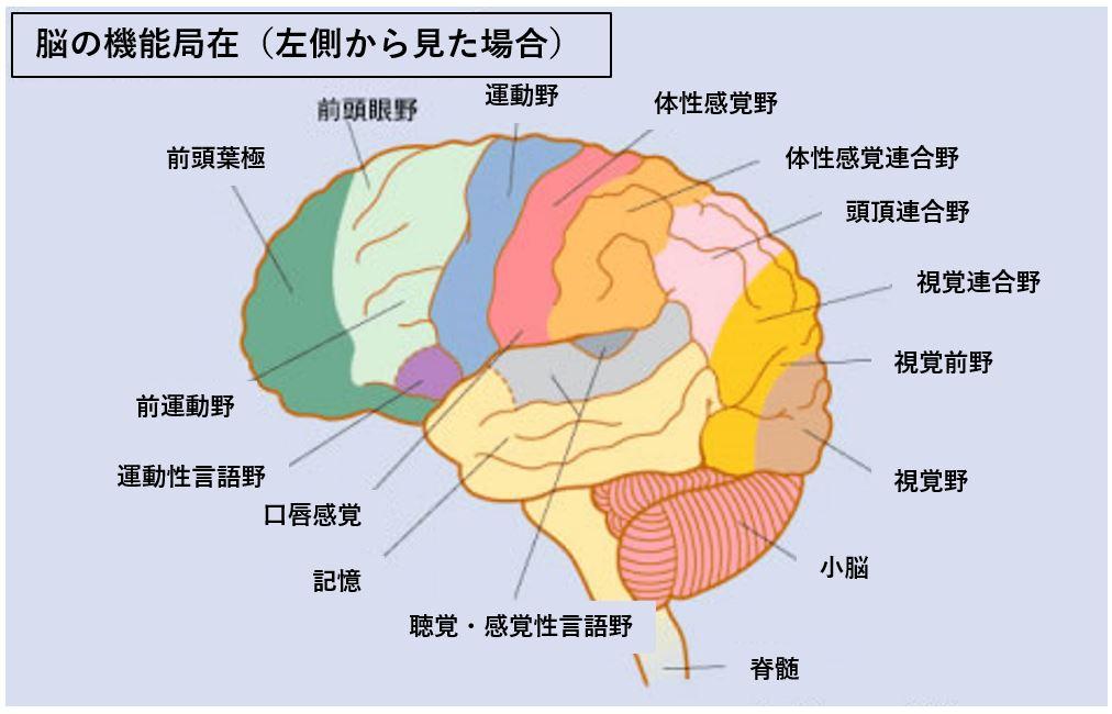 脳機能局在 乳首 感じる 性感帯